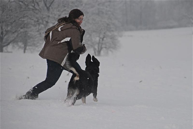 Philosophie der mobilen Hundeschule HMV