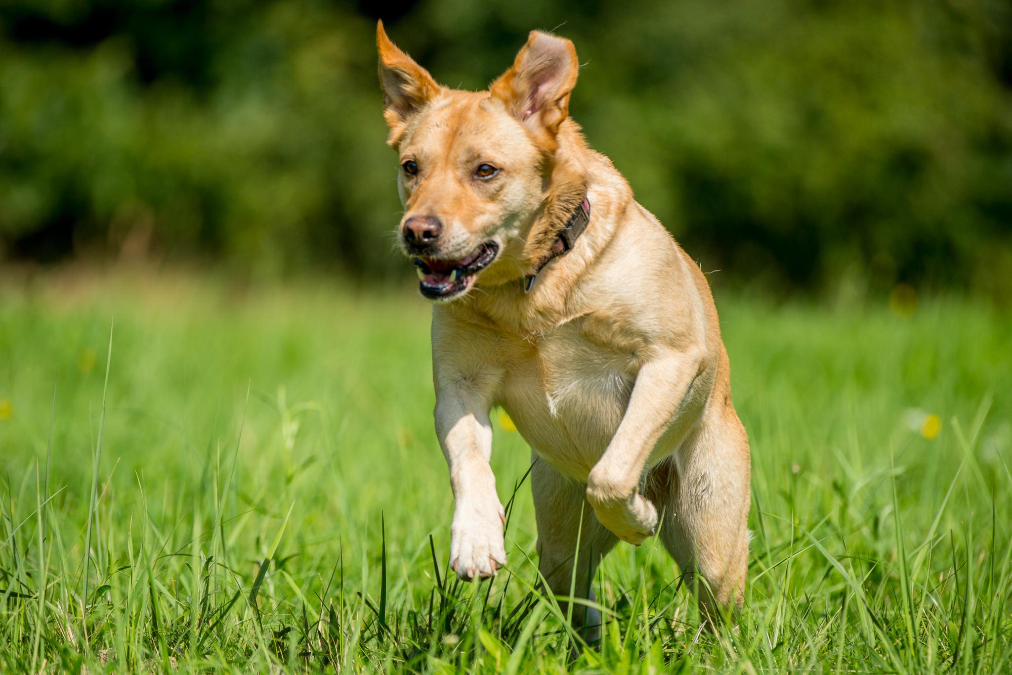 Mobile Hundeschule HMV