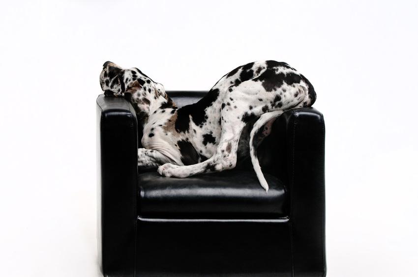 Philosophie der Hundeschule HMV Wien