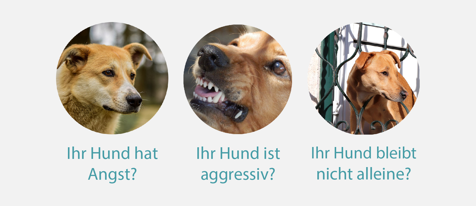 hundeschule-agressiv-angst